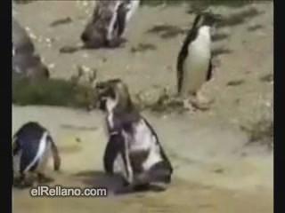 Techno Pinguin